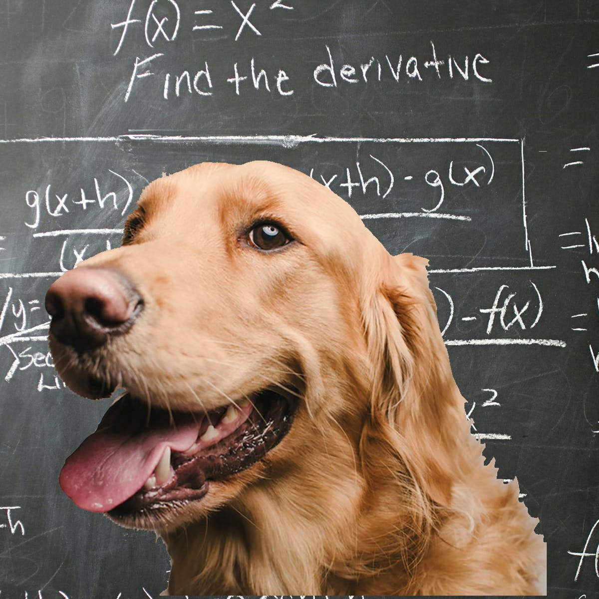 Scientists discover dogs can do math, too