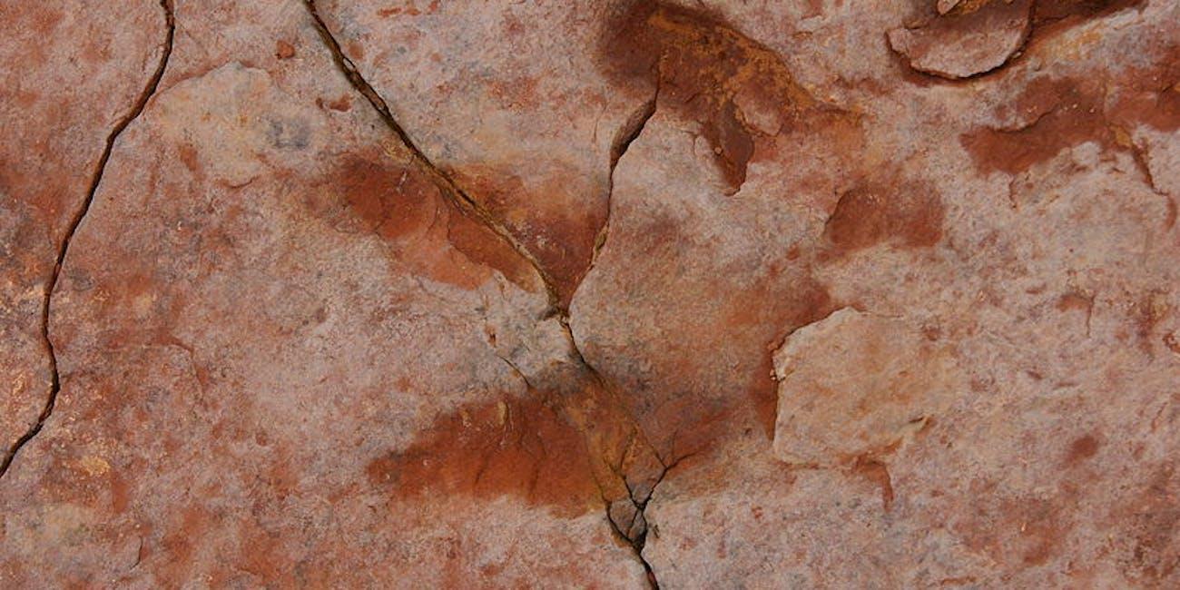 dilophosaurus prints