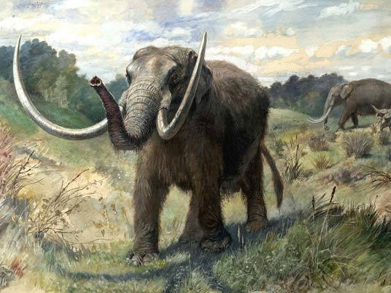 People Were Hunting Mastodon in Florida 14,550 Years Ago