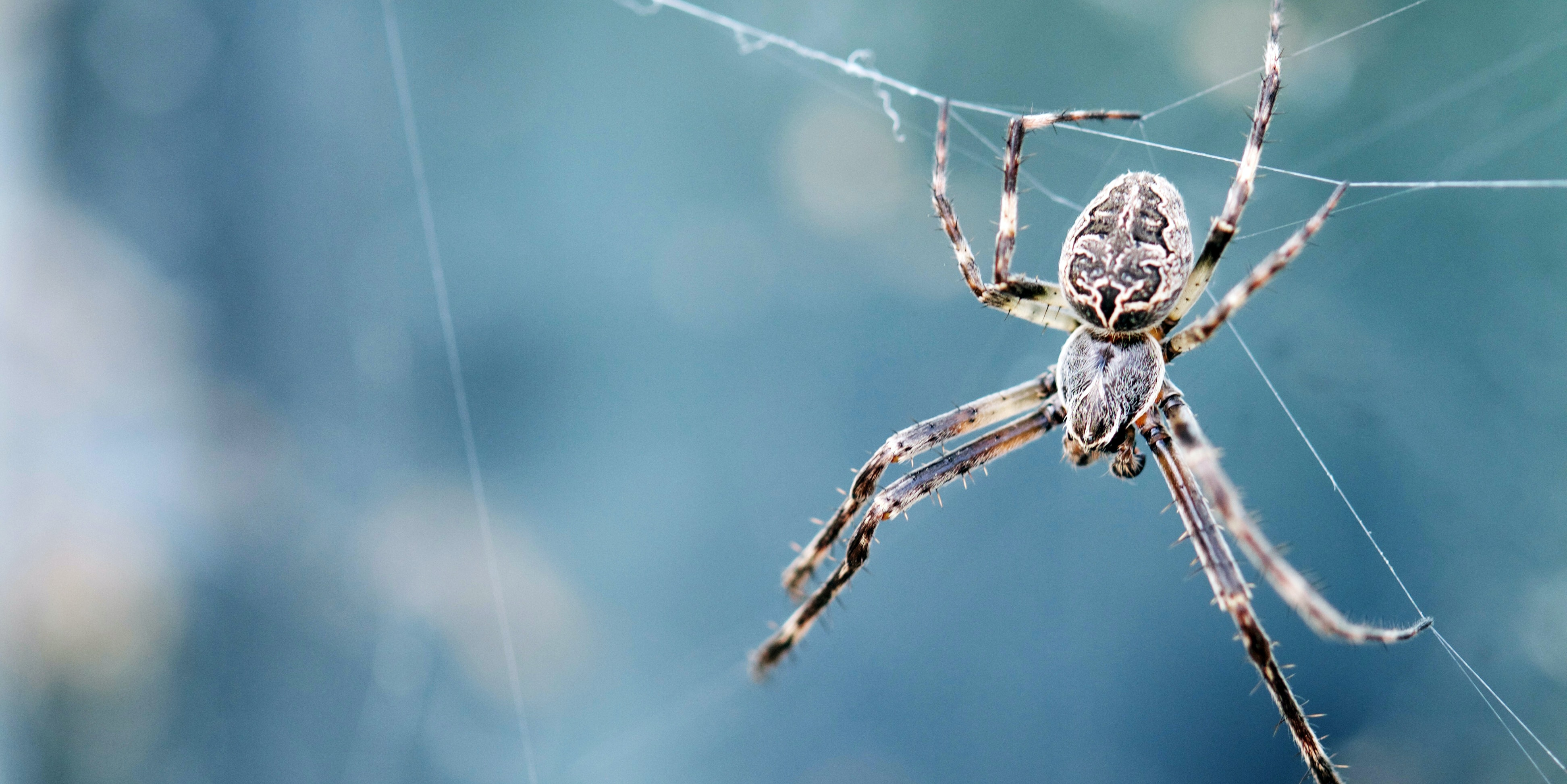 Spiders Can Fly and They Don't Even Need Wings, Study Claims