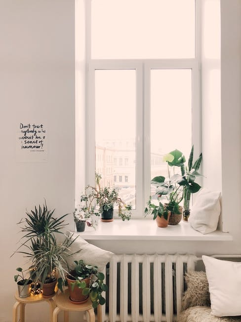 nasa says these houseplants will purify the air in your house inverse rh inverse com