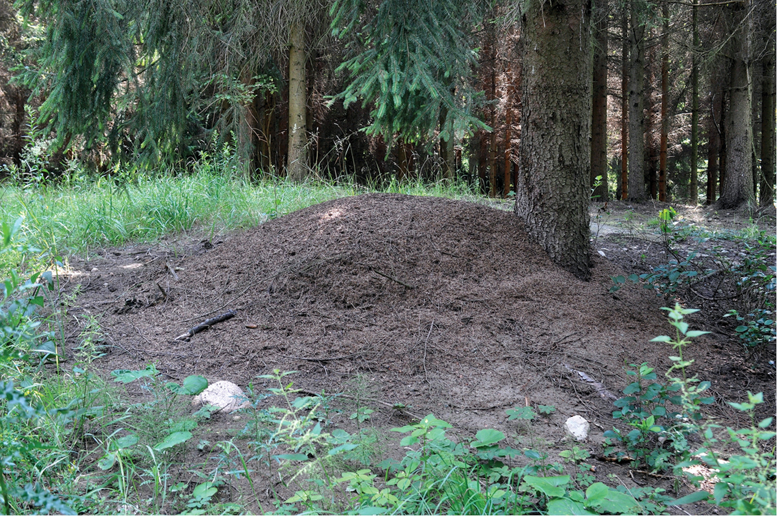 A colony of free ants hums along above the surface, producing an endless supply of labor to the bunker mound below.