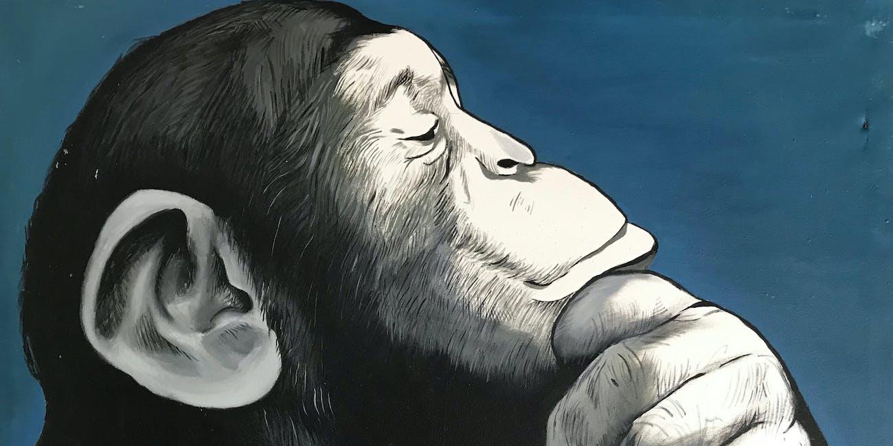 chimp thinking a good idea
