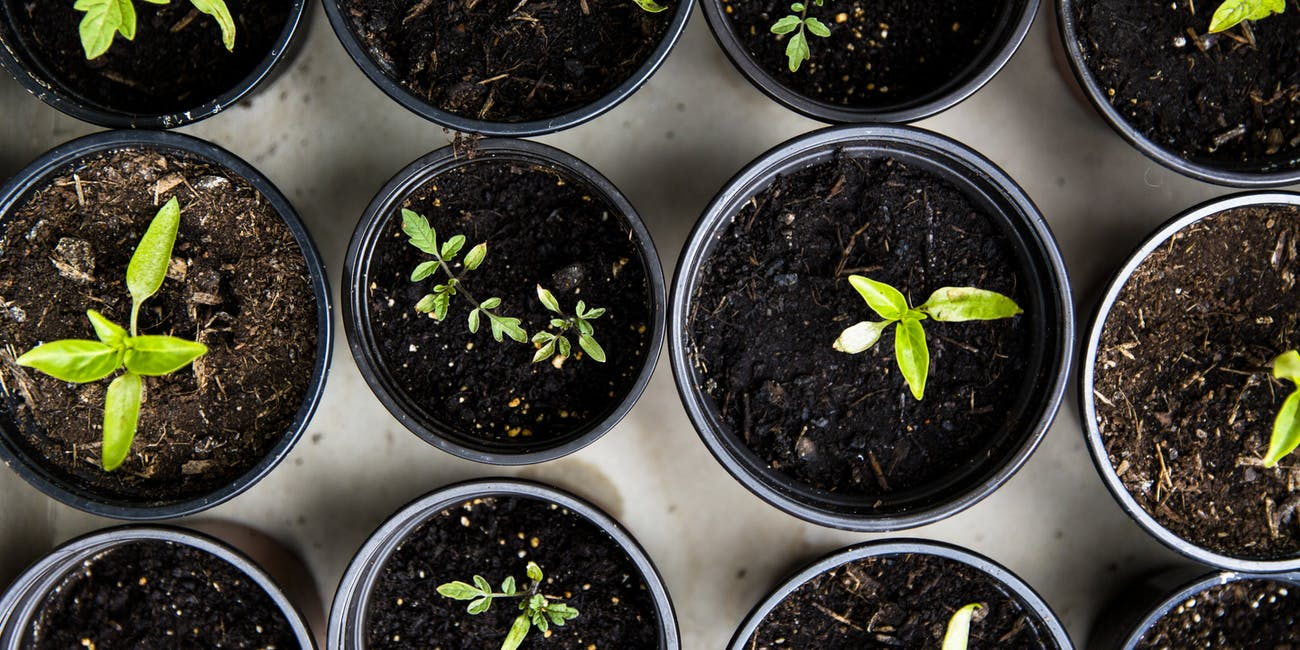 Why Doctors Are Prescribing Gardening for a Common Mental