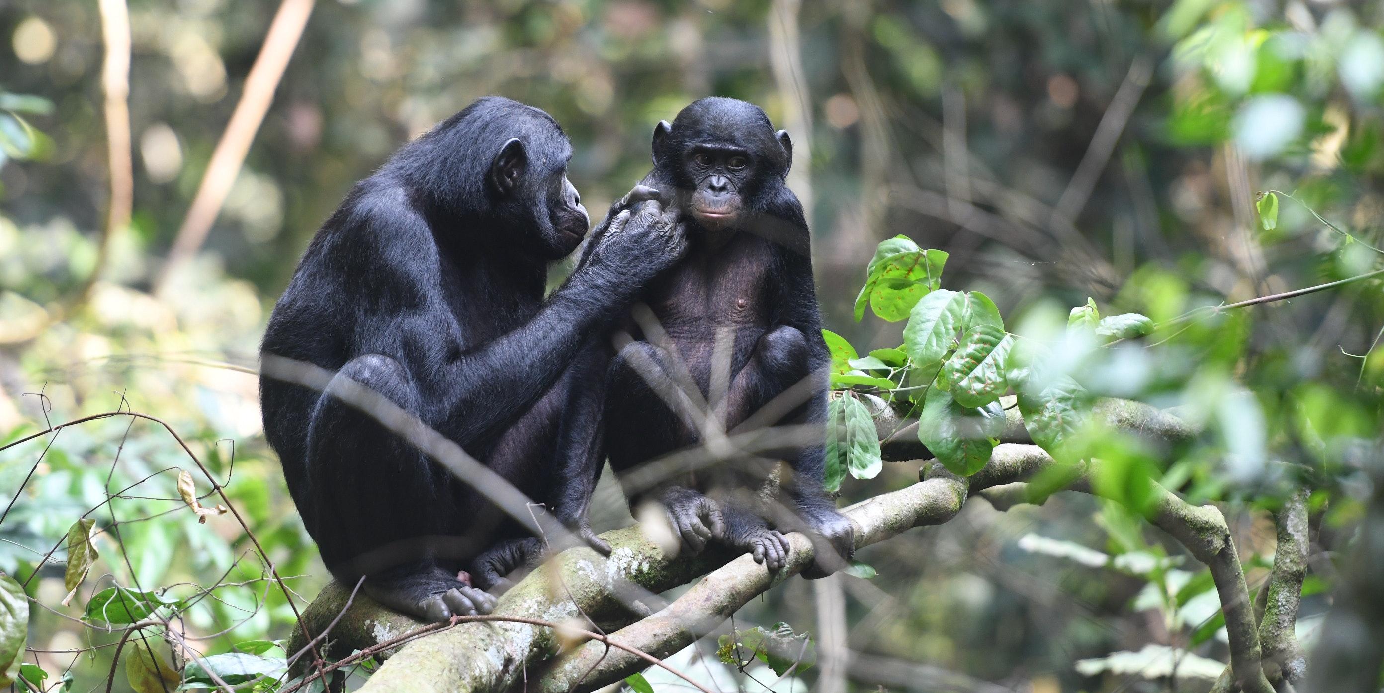 Moms of Other Species Pressure Their Kids Into Having Grandchildren, Too