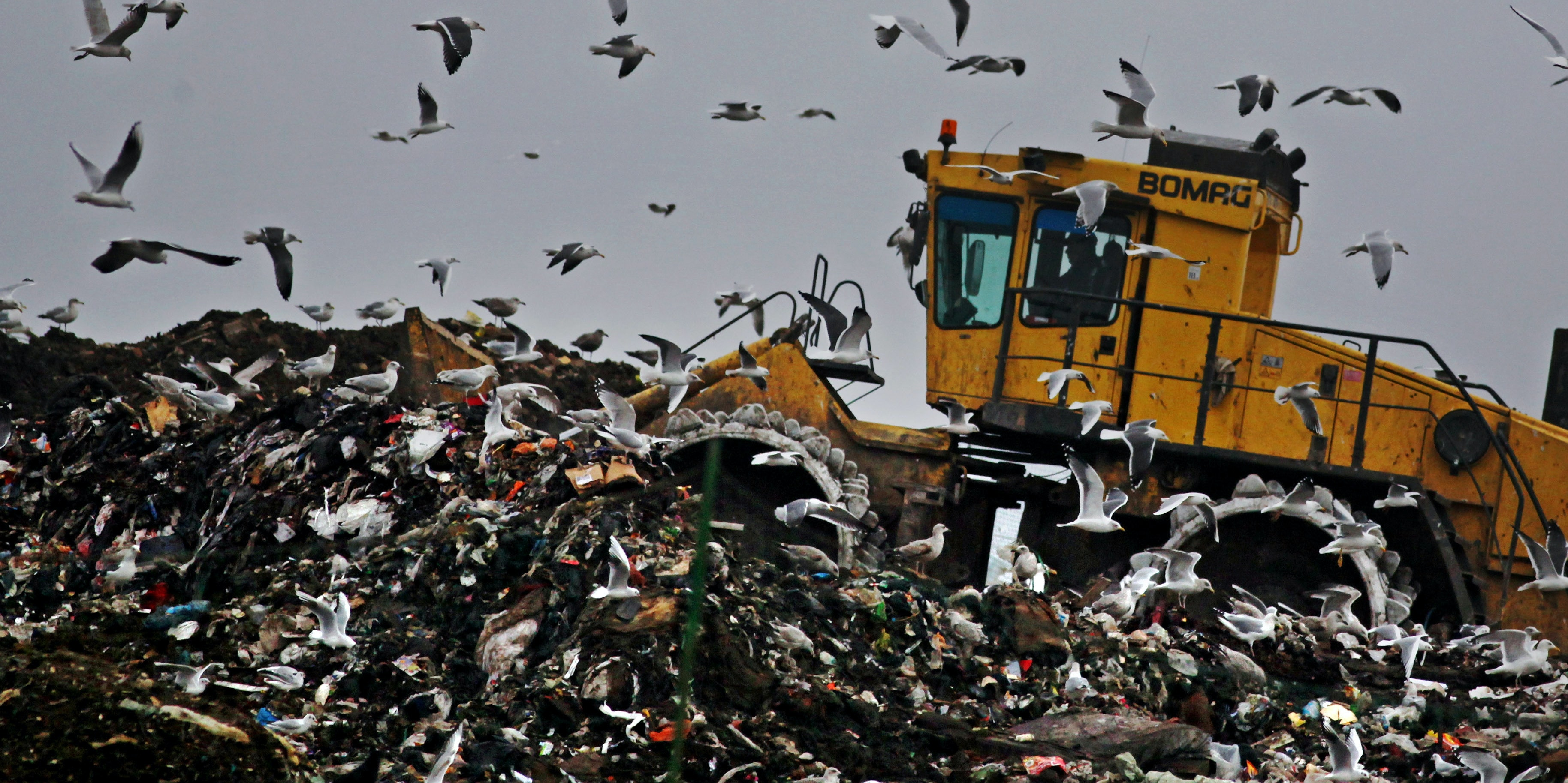 Seagulls fly around as a bulldozer compacts freshly dumped rubbish at a landfill site on November 18, 2009 in Gloucester, England.
