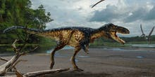 Early Tyrannosaur Fossil Suggests Smarts Came First, Then Size