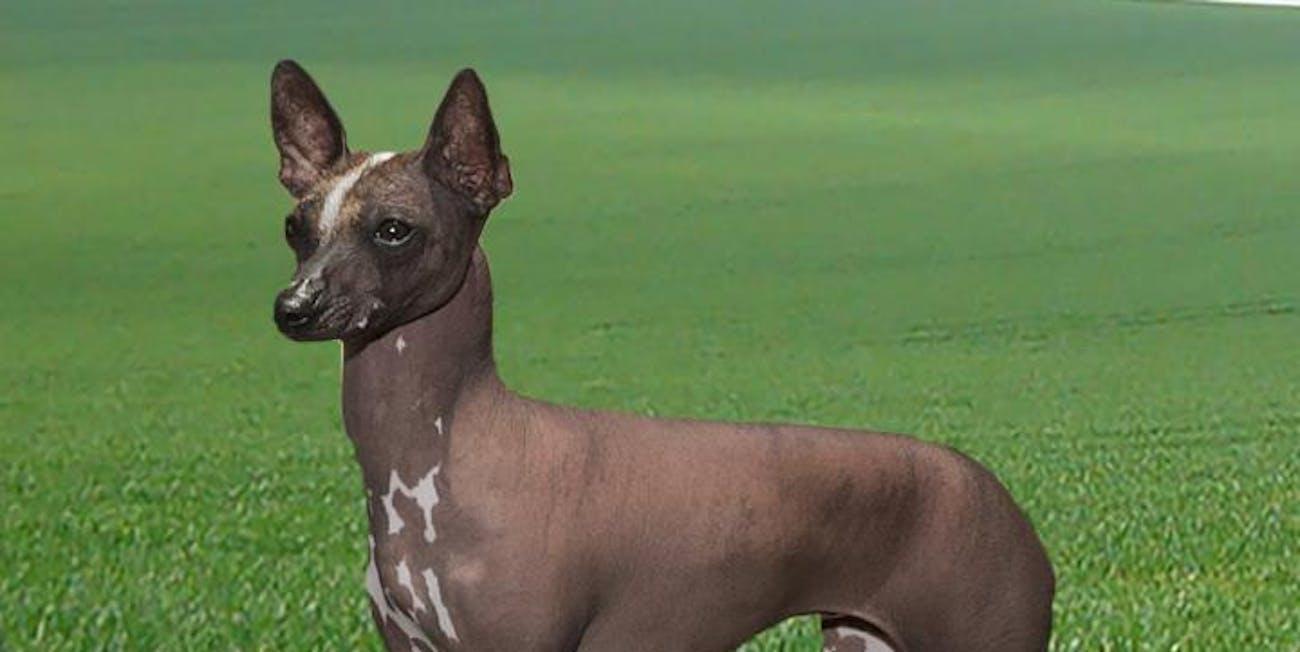 dog genetics study reveals descendants of the all american pup inverse