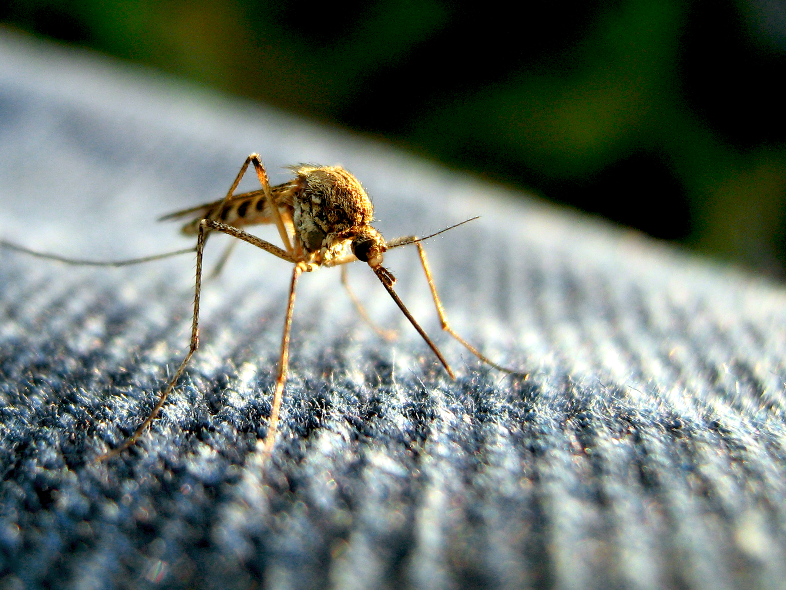this simple solution keeps mosquitos far far away inverse