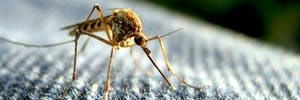 Mosquito repellant fan closeup summer bug deet wrist patch