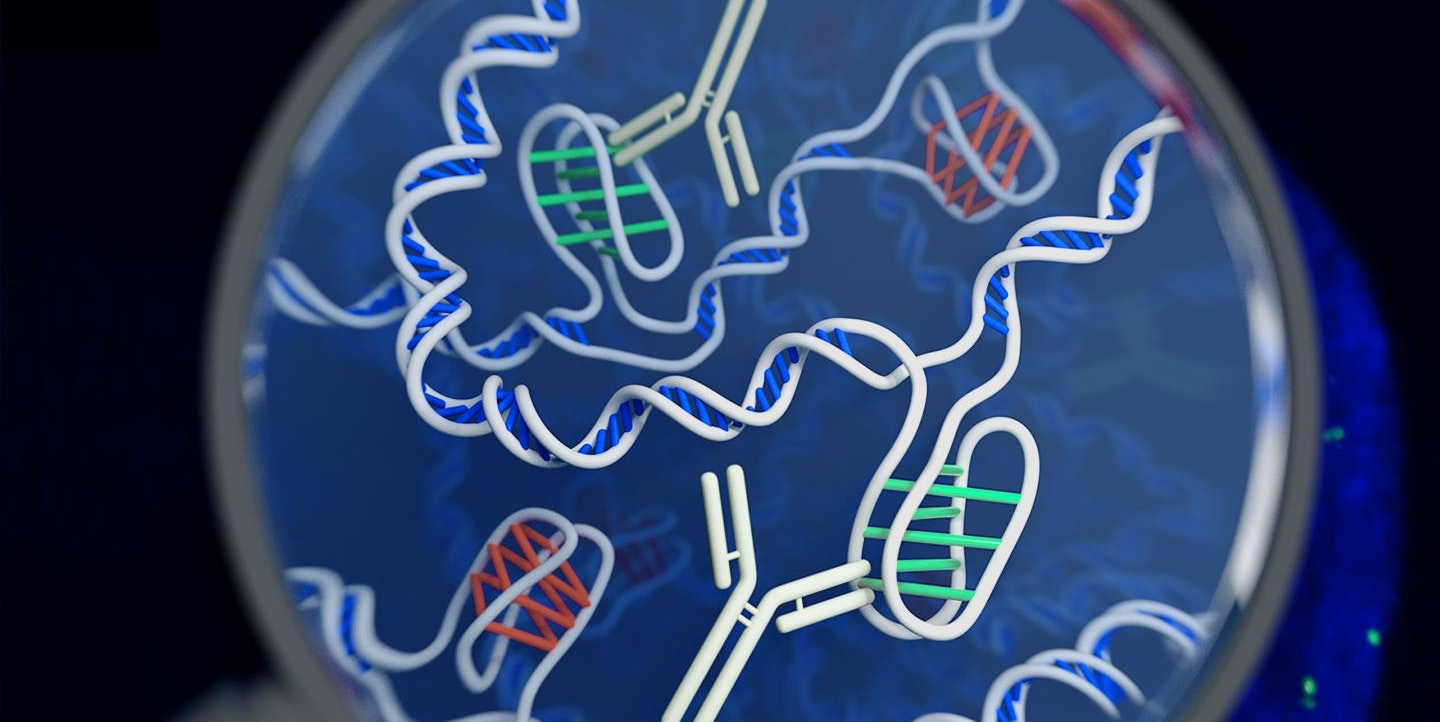 Move Over, Double Helix: A New Form of DNA Has Just Been Discovered