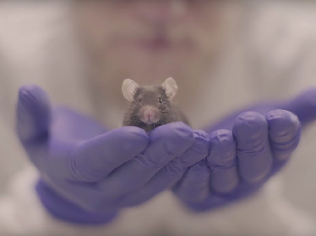 Can Showing Movies to Mice Unlock Secrets of Consciousness?