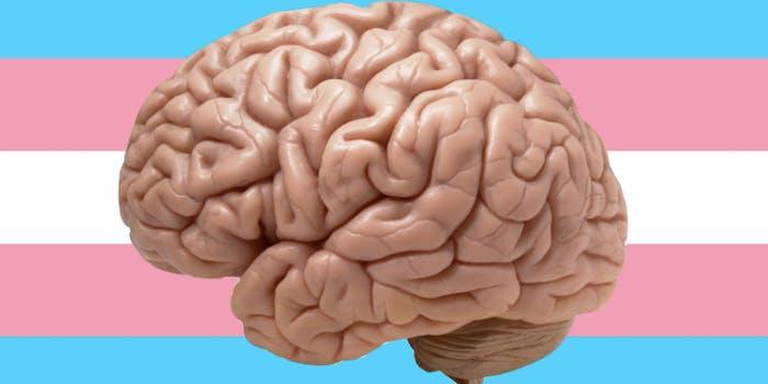 Transgender, brain, pride