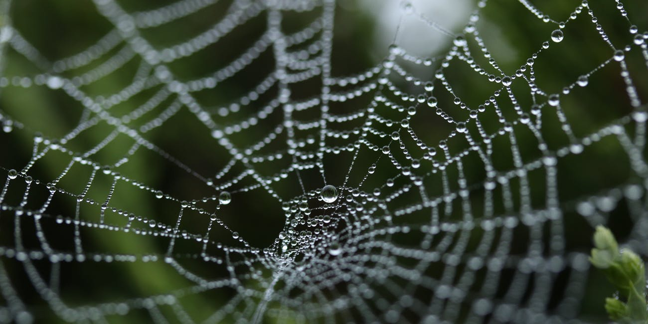 "Intense Hurricanes Are Making ""Super Abundant"" Spiders More Aggressive"