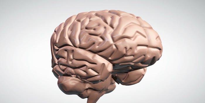 3D model of the human brain