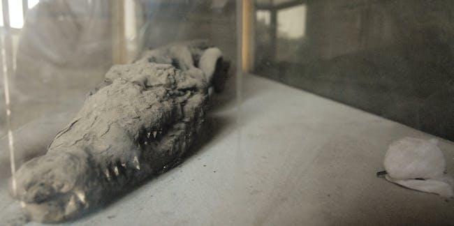 Mummified Crocodile, Egypt