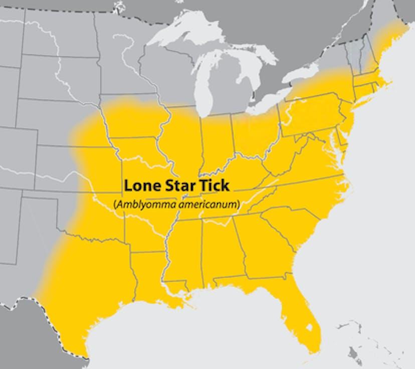 meat allergies lone star tick