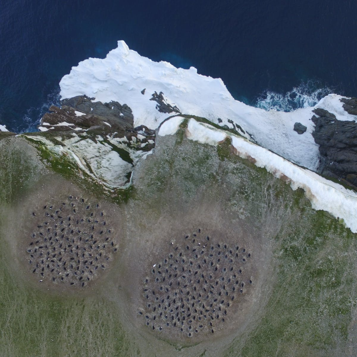Penguin Mega-colony: How Scientists Used Space Tech to Find Group