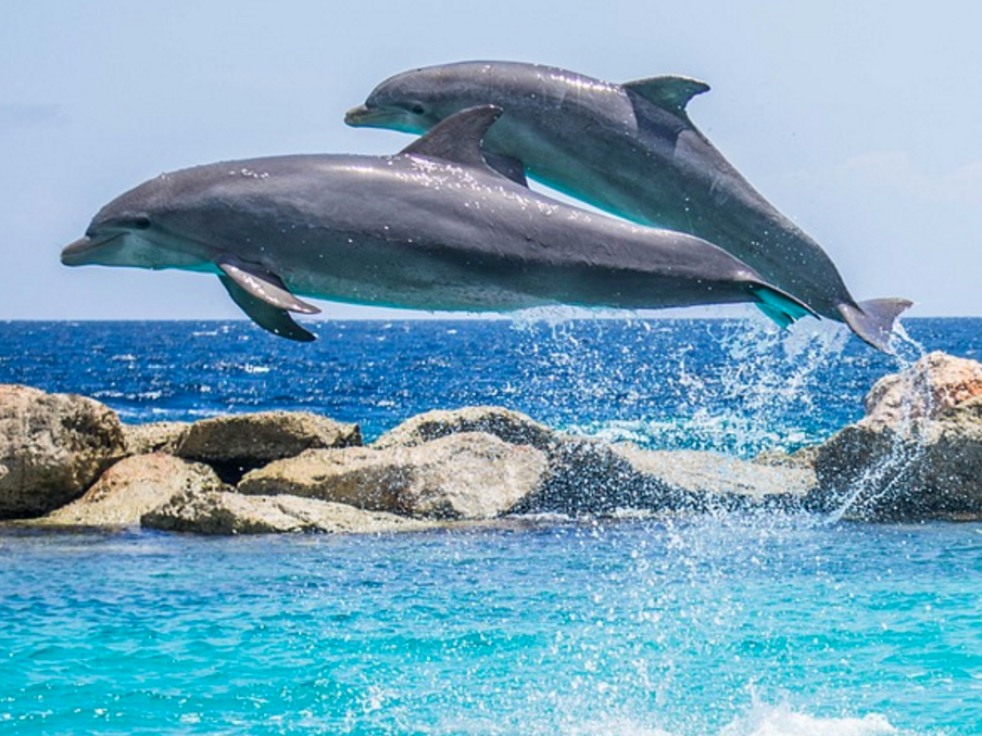 Scientists Recorded Two Dolphins Having a Chat, NBD