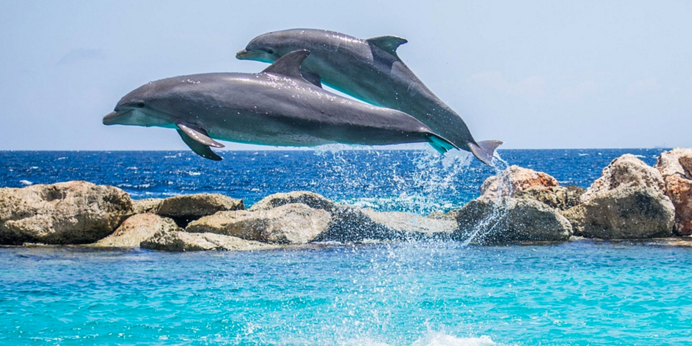 Two dolphins had a chat.