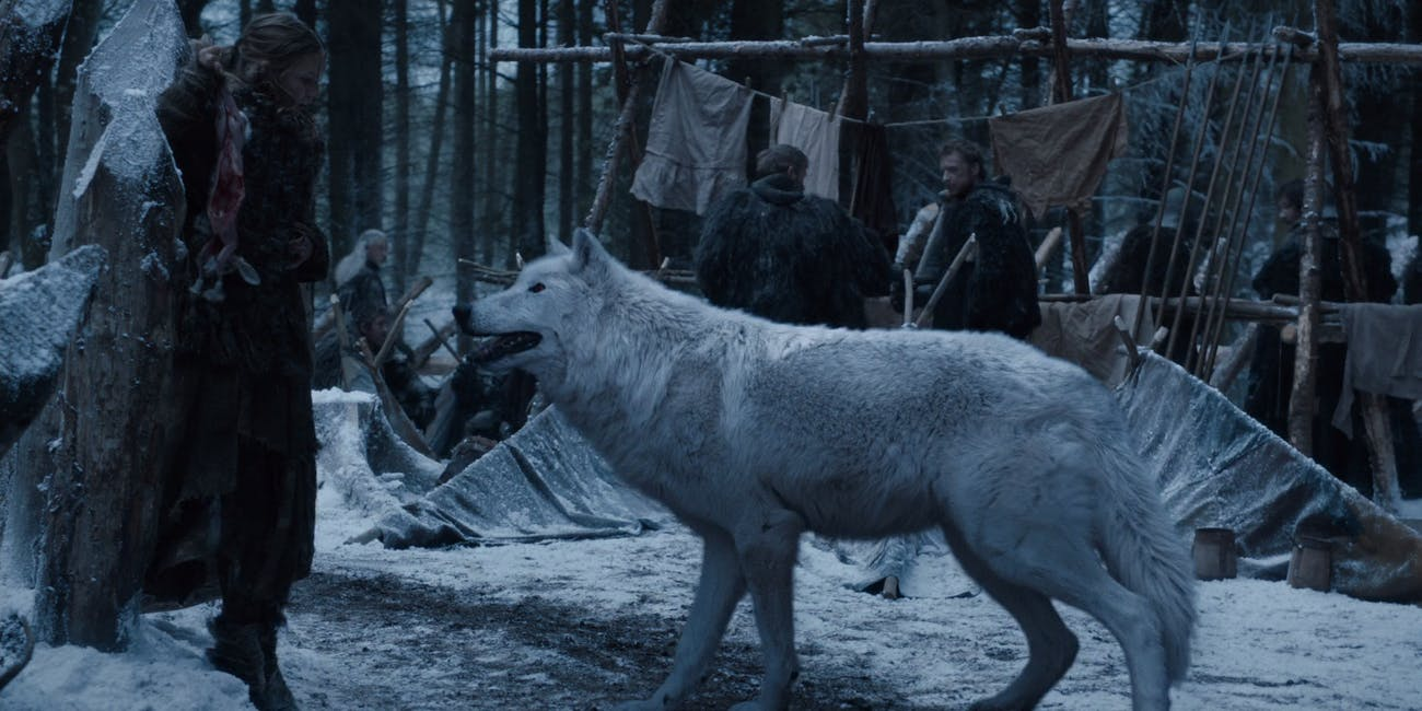 Ghost Game of Thrones dire wolves season 6 de-extinction wolves