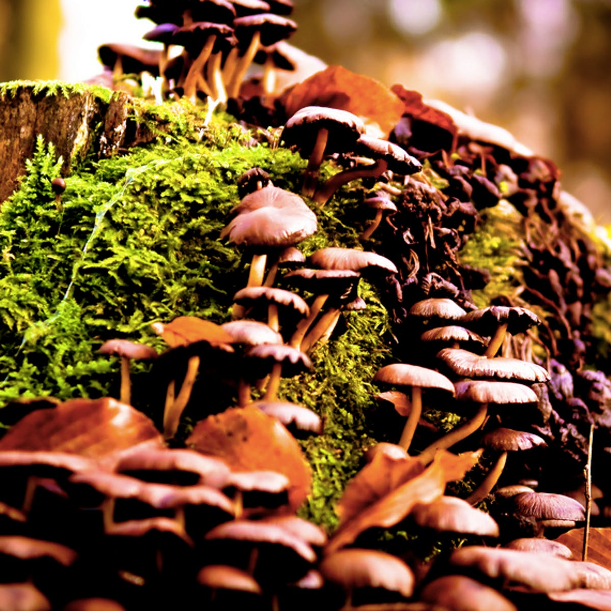 Scientists Discover Why Magic Mushrooms Evolved Psilocybin