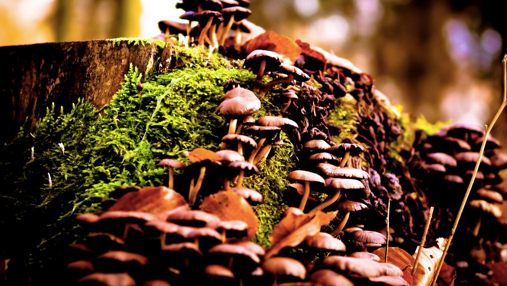 scientists discover why magic mushrooms evolved psilocybin inverse rh inverse com