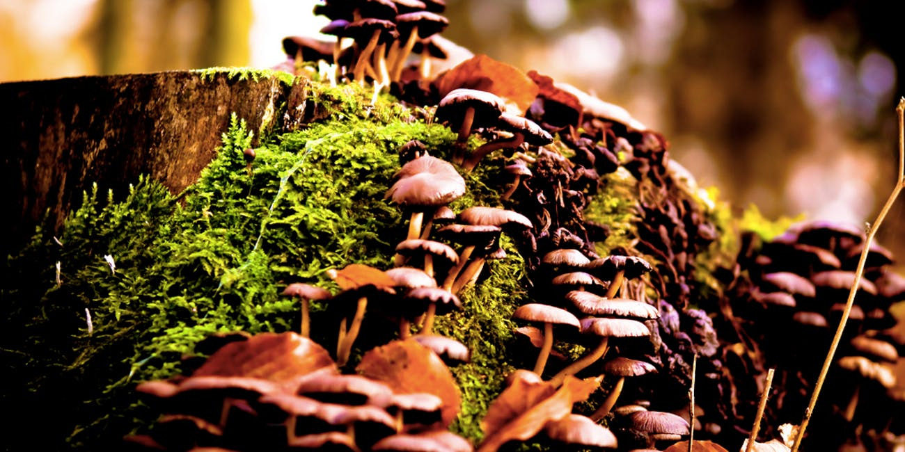 Scientists Discover Why Magic Mushrooms Evolved Psilocybin | Inverse