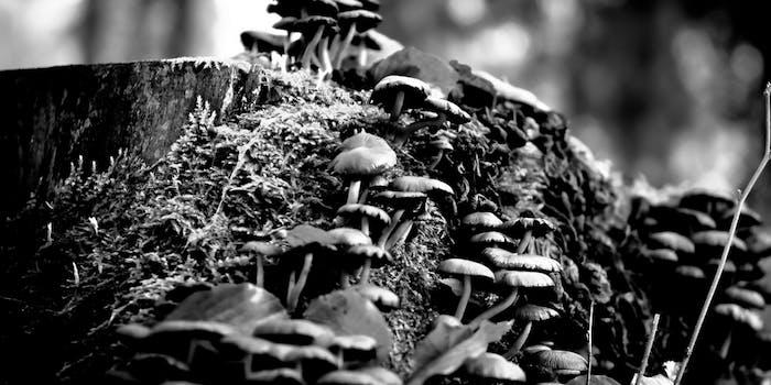 This is why magic mushrooms have psilocybin.
