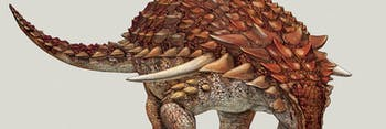 alberta oilsands nodosaur royal tyrrell museum
