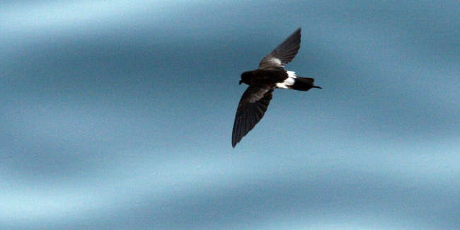 San Cristobal's clean energy efforts should help save the endanger petrel.