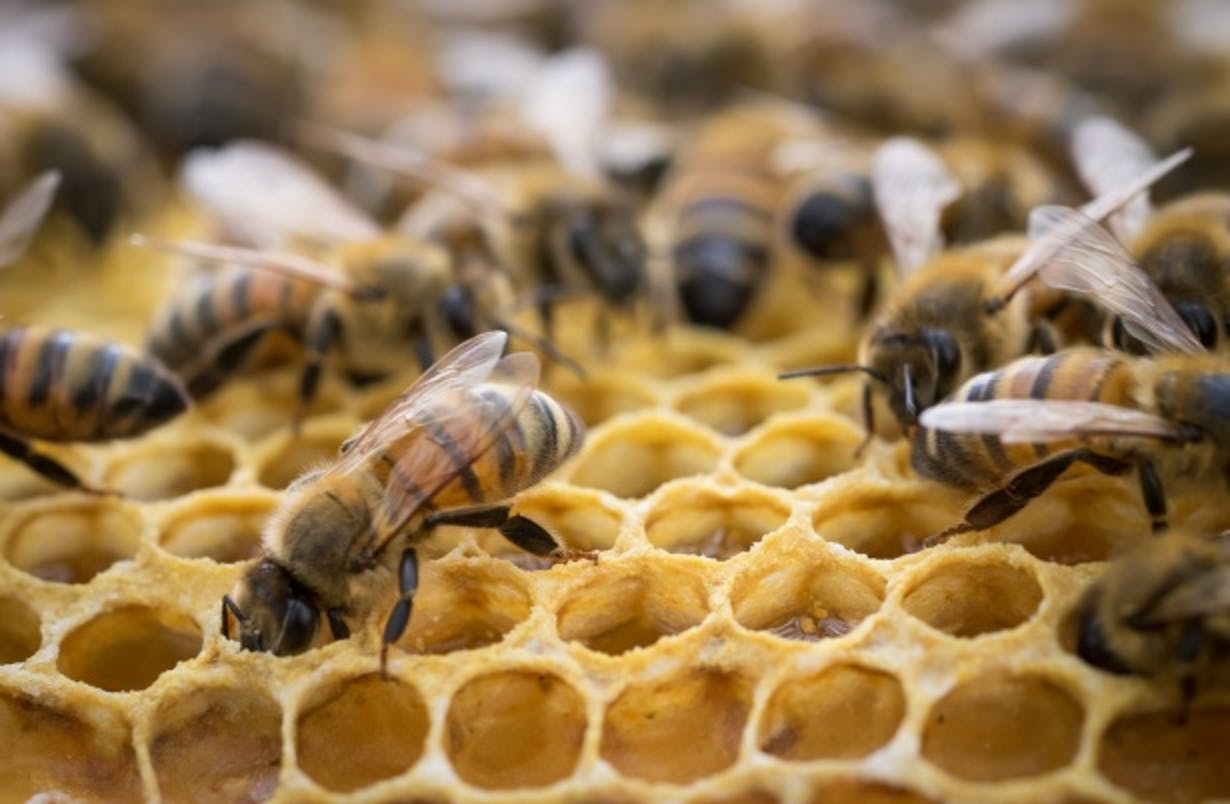 Inside The Bee Hive Free Stock Photo - Public Domain Pictures