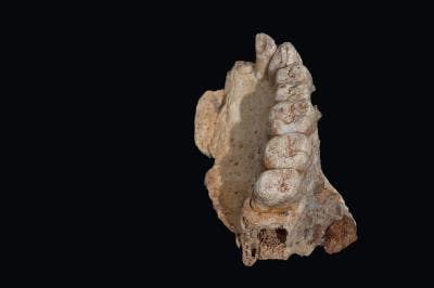 jawbone misliya cave ancient human migration africa