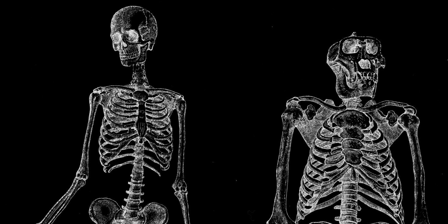 """Uniquely Human"" Muscles Found in Apes Contradict Key Evolutionary Dogmas"