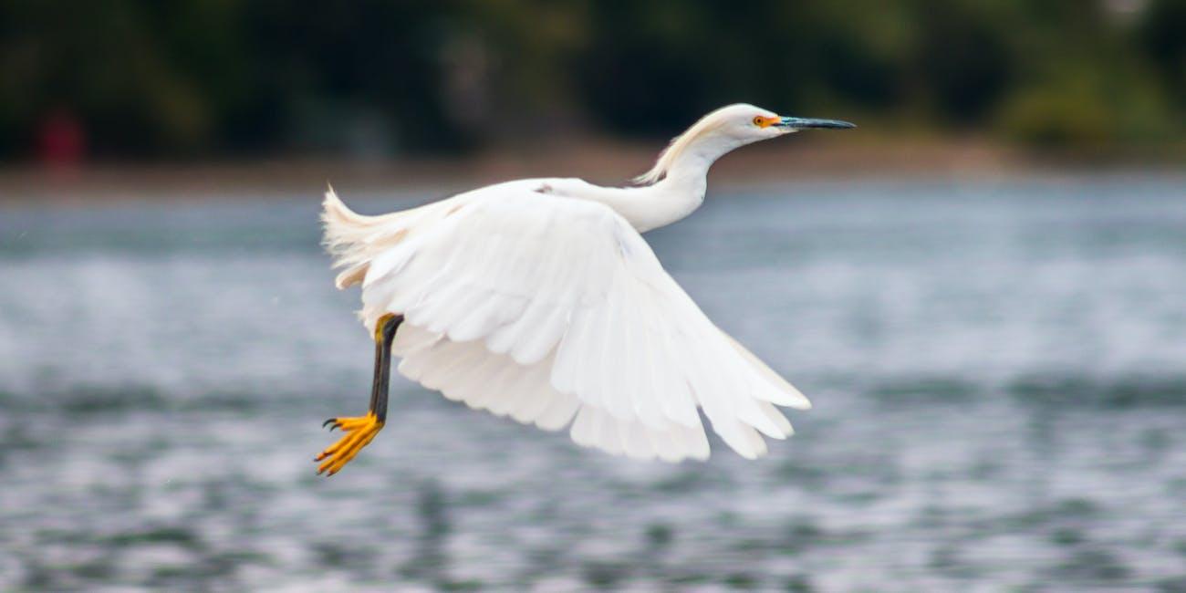 Bird feathers in flight