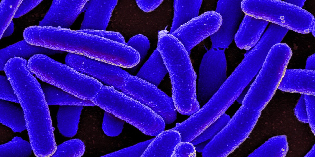 Romesberg inserted X and Y into the DNA of the bacteria E. coli, where it was retained over multiple generations.