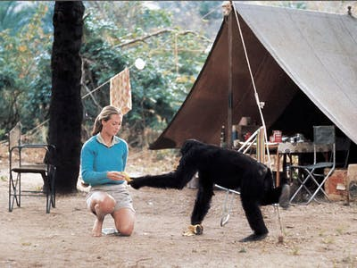Jane Goodall David Greybeard