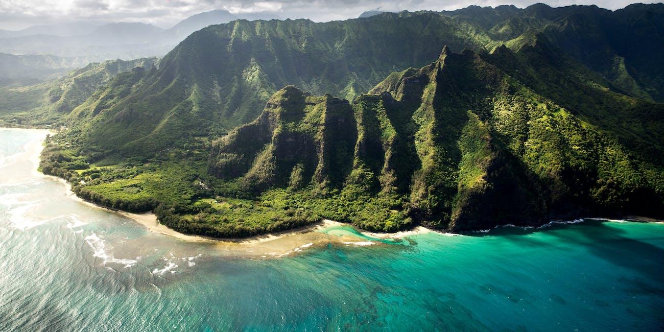 Hawaiian forest