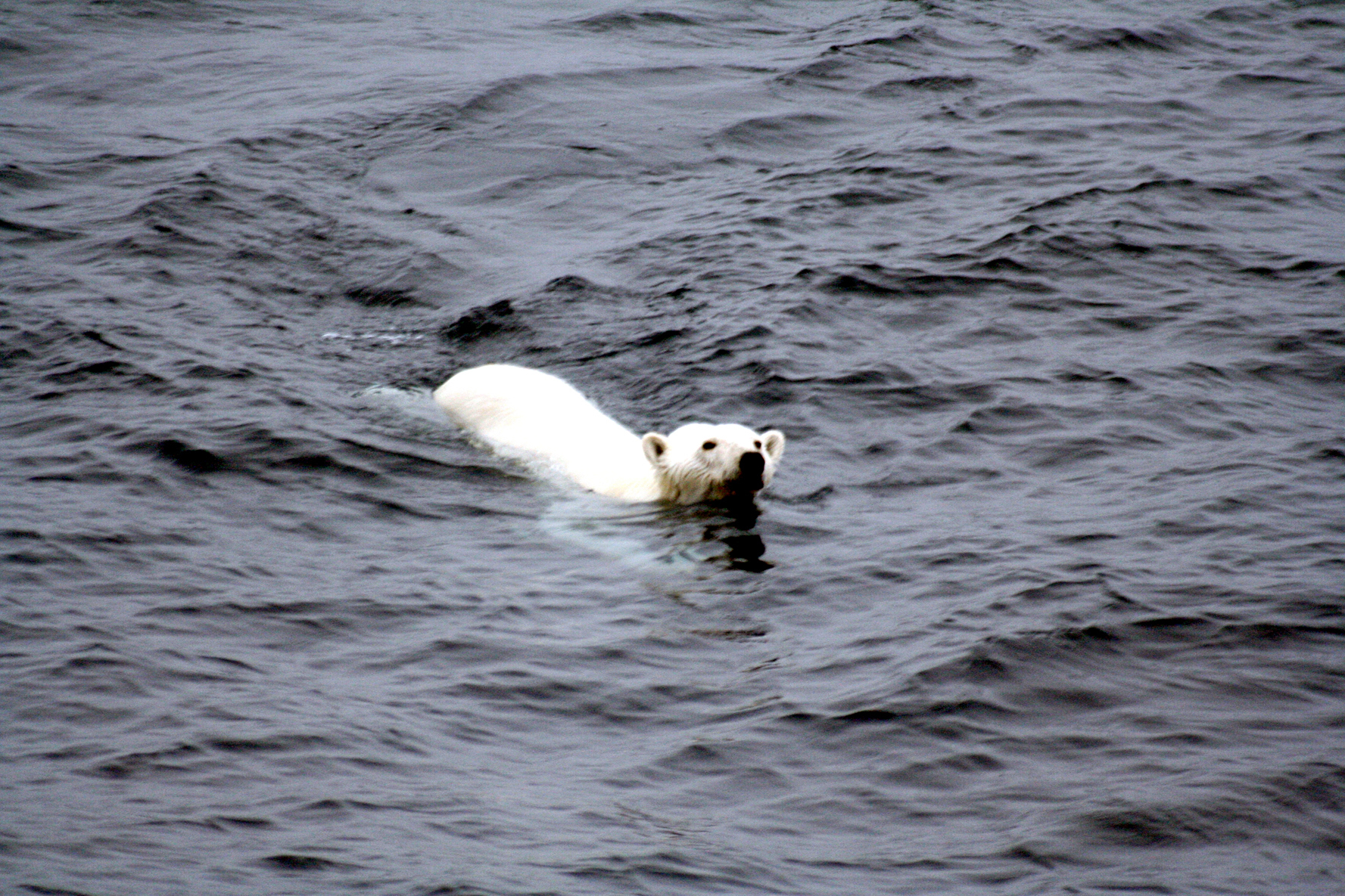 Arctic sea ice retreat pinned to individuals' emissions
