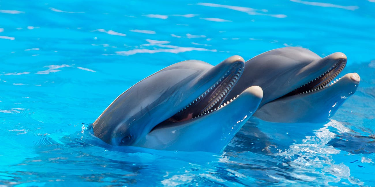 Understanding dolphin sex is a boon for researchers hoping to improve dolphin conservation.