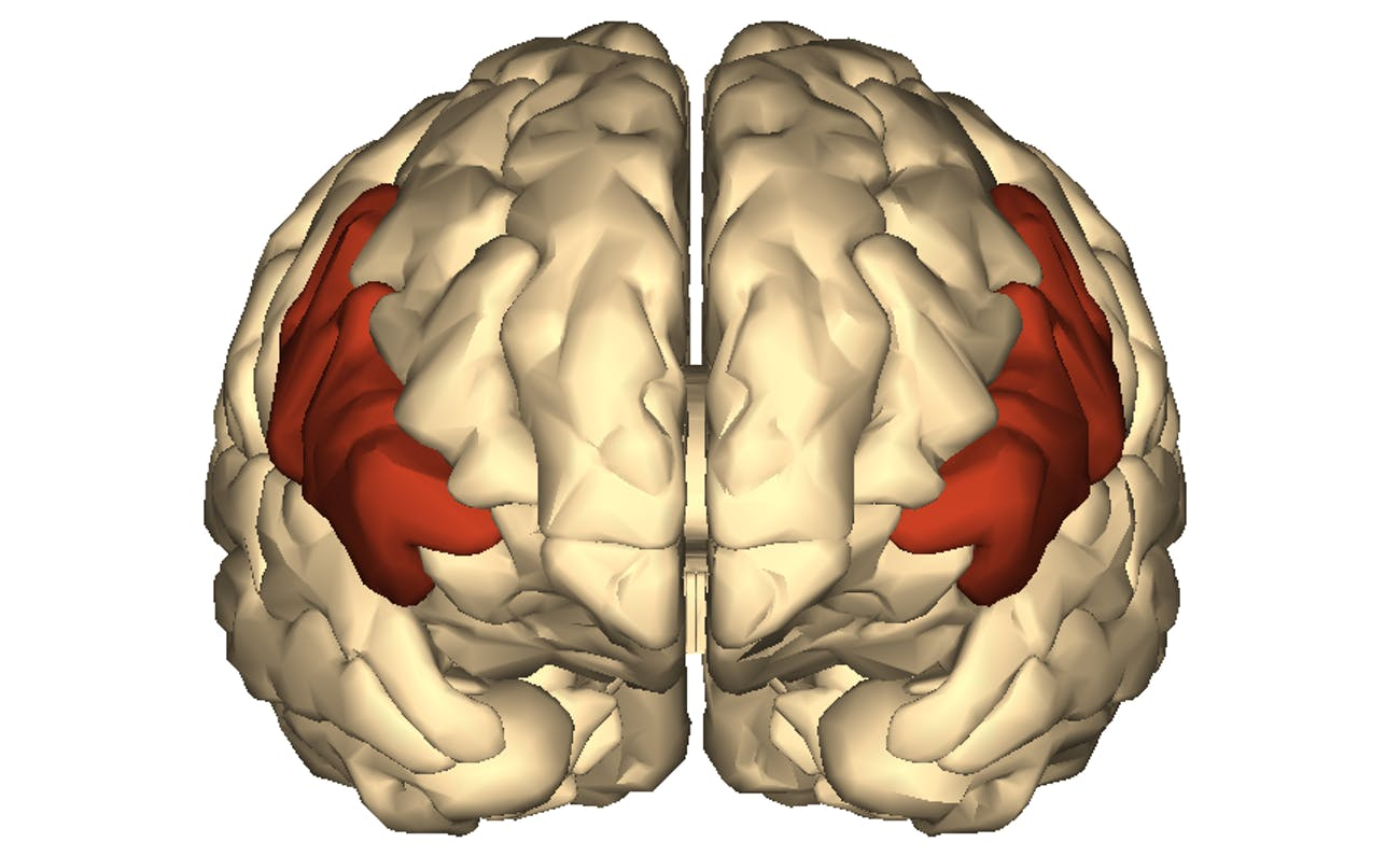 inferior frontal gyrus brain