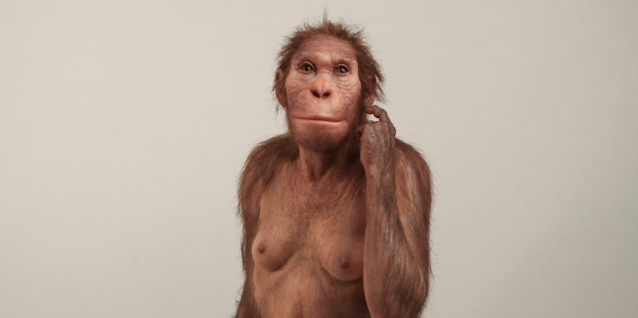 Australopithecus sediba
