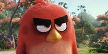 Donald Trump-Supporting White Supremacists Really Love the Angry Birds Movie