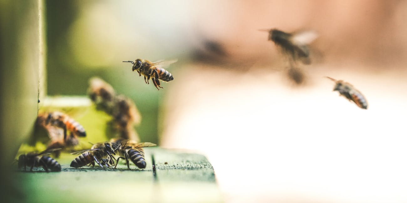 Bees make delicious honey and are necessary to the ecosystem