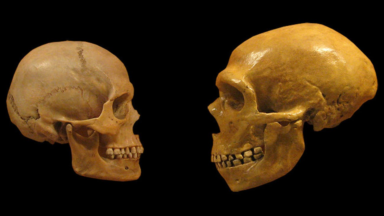 Human Intelligence Evolved Uniquely Thanks to Our Skulls