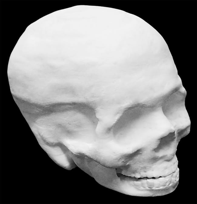Photograph of a Hyperelastic Bone human skull. Interior of the skull is hollow.