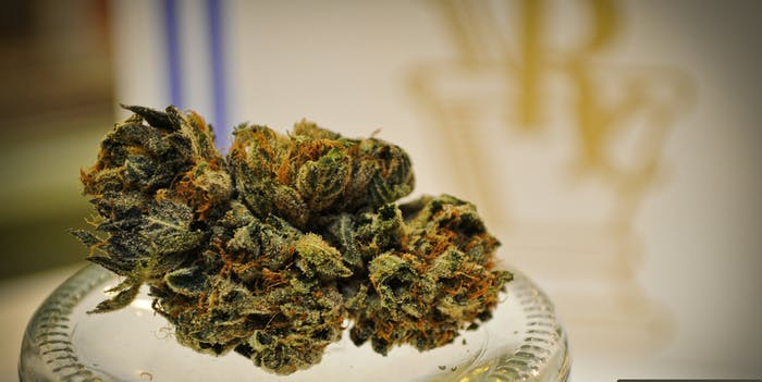 weed on jar