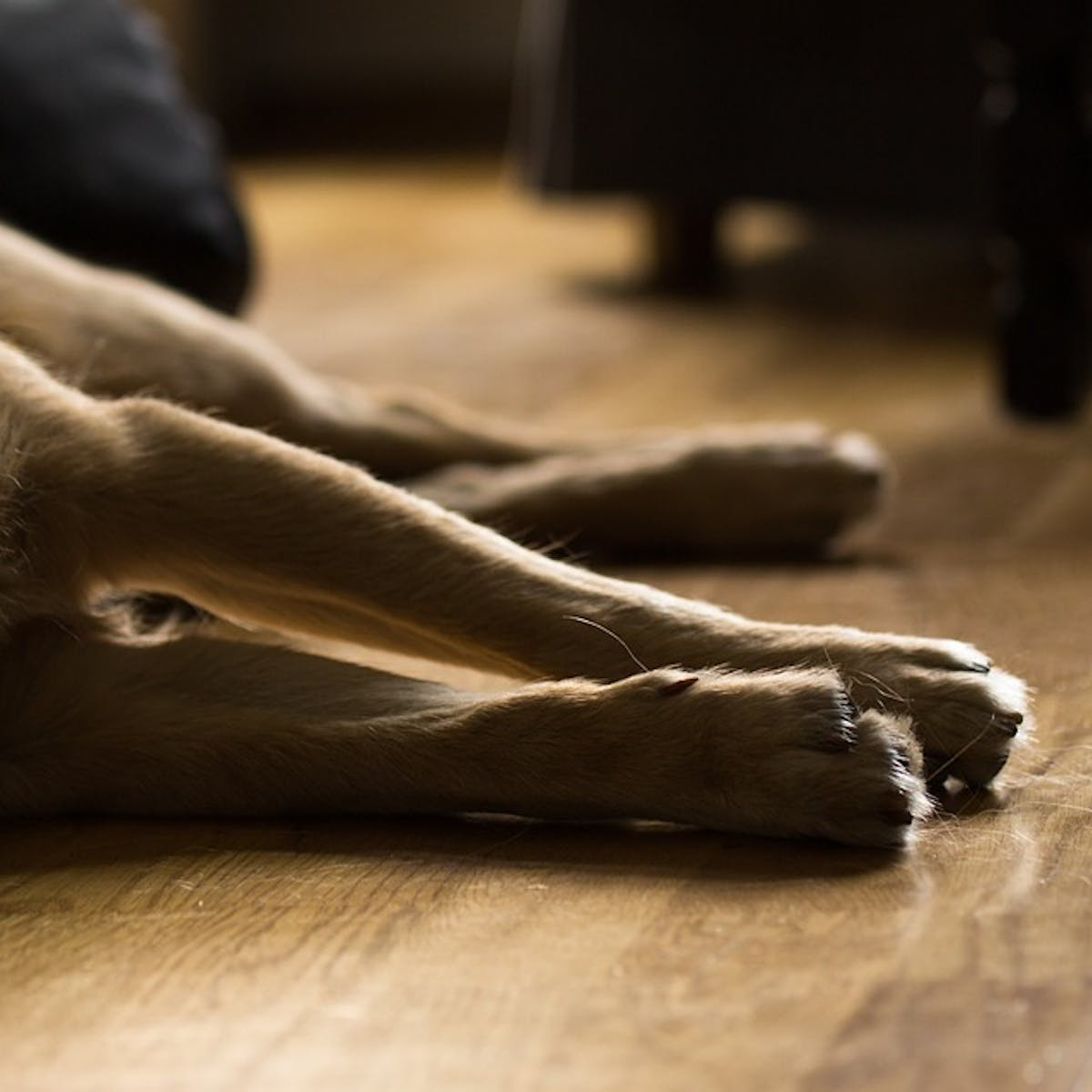 Does the Death of a Pet Warrant Bereavement Time? A Scientist Weighs In