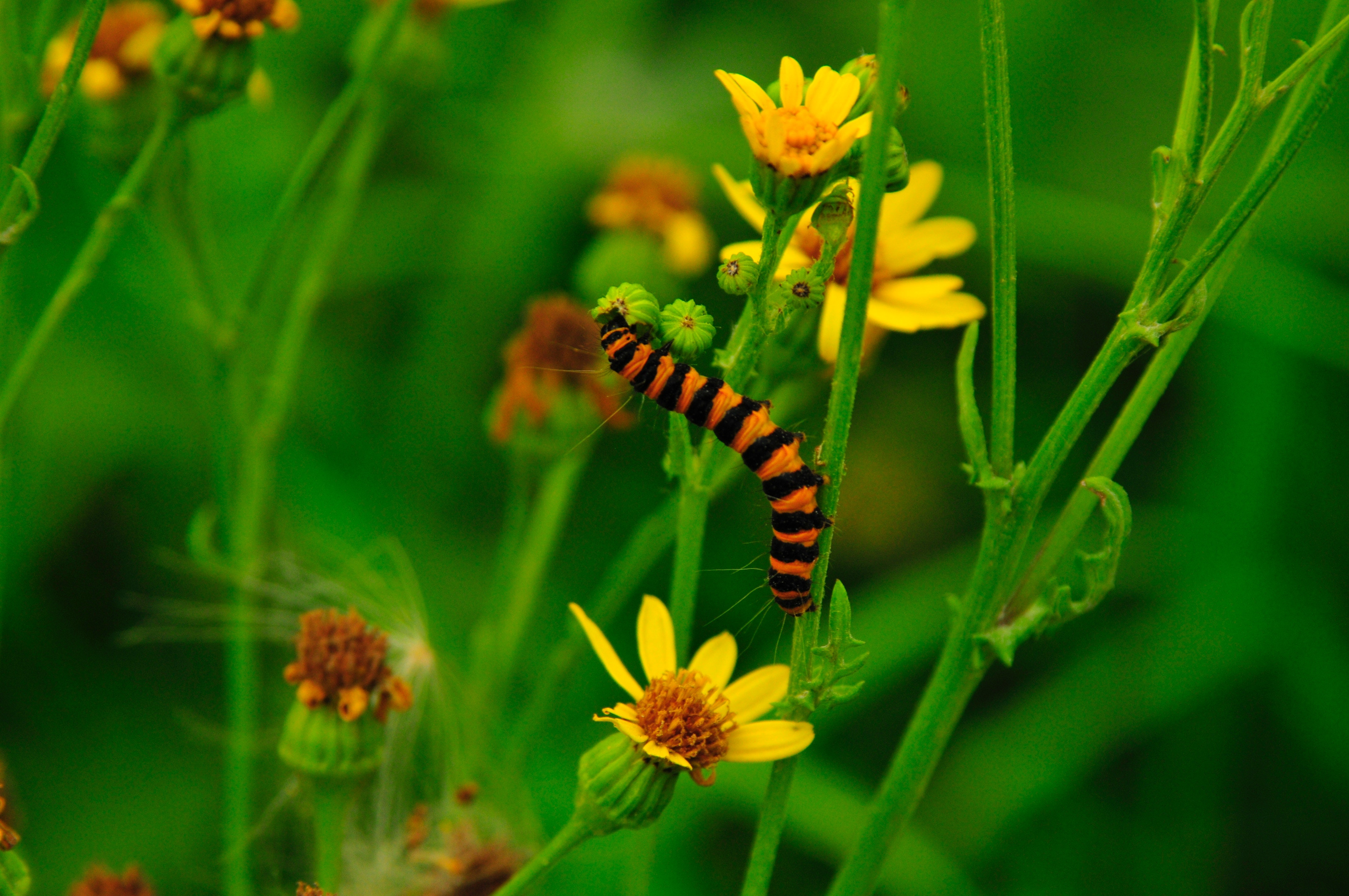 """""""Bugpocalypse"""" Study Reveals What Will Happen if All the Insects Disappear"""