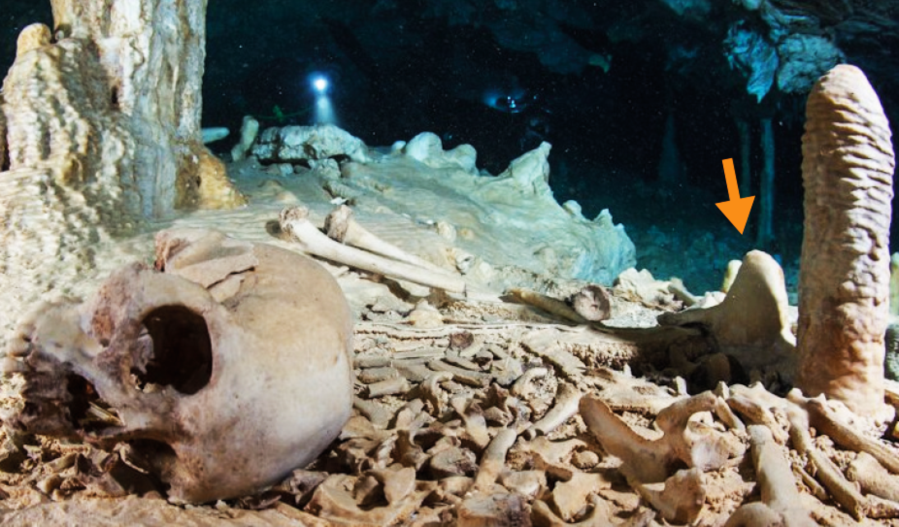Carbon dating human fossils discovered